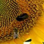 10 règles d'or pour l'aménagement de jardin