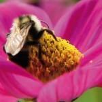 Eco-paysagiste : mes convictions écologiques au quotidien