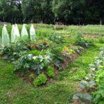 Permaculture potager : les étapes de création en image