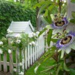 Idées jardin pour les petits espaces